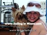 miami pet friendly charter XS