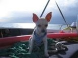 pet friendly sailing xs